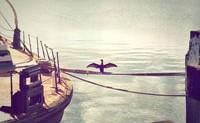 如果不吃海鲜 青岛、大连、北戴河哪里值得去?